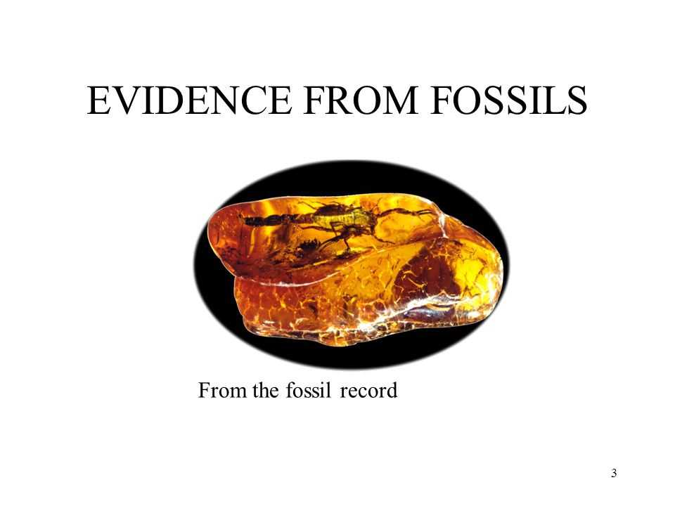 EVIDENCE FROM FOSSILS From the fossil record