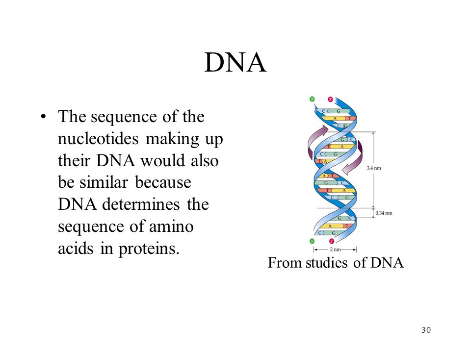 DNA From studies of DNA.