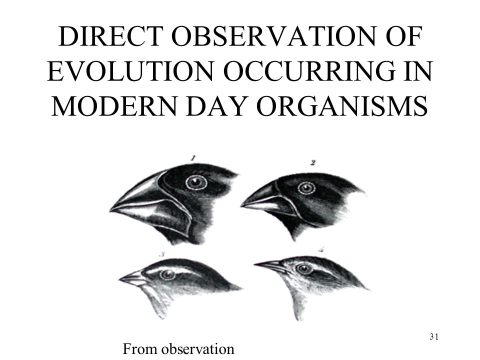 DIRECT OBSERVATION OF EVOLUTION OCCURRING IN MODERN DAY ORGANISMS