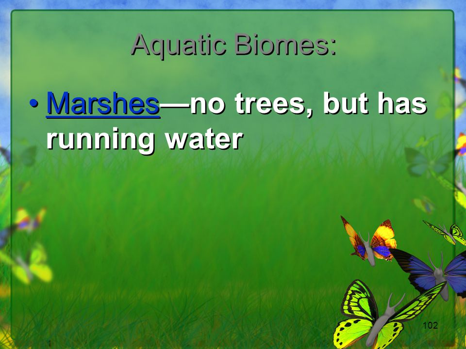 Marshes—no trees, but has running water