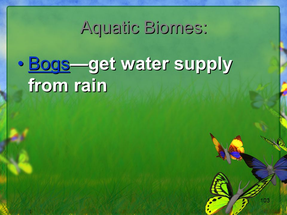 Bogs—get water supply from rain