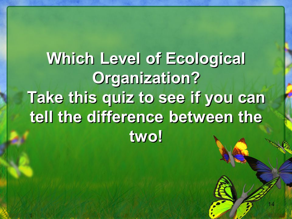 Which Level of Ecological Organization