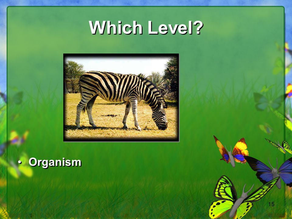 Which Level Organism