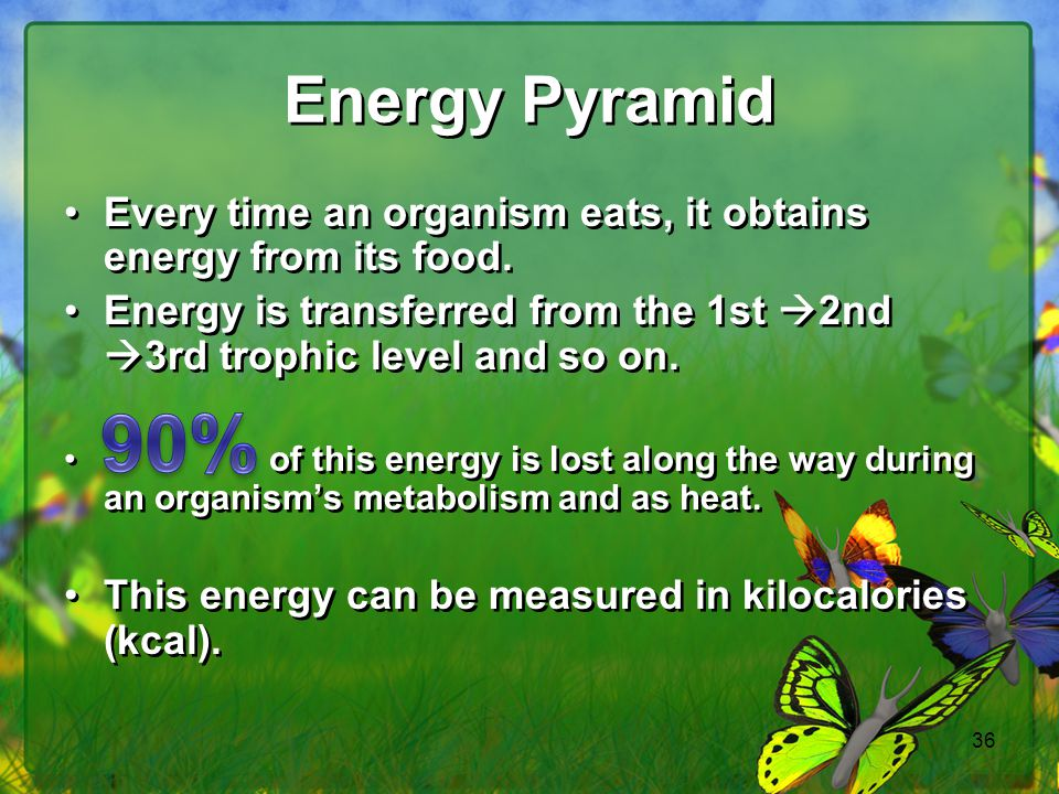 Energy Pyramid Every time an organism eats, it obtains energy from its food. Energy is transferred from the 1st 2nd 3rd trophic level and so on.