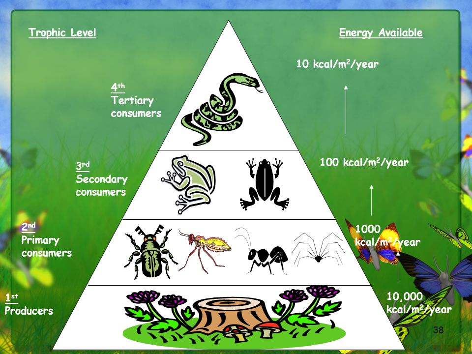 Trophic Level Energy Available. 4th. Tertiary consumers. 10 kcal/m2/year. 3rd. Secondary consumers.