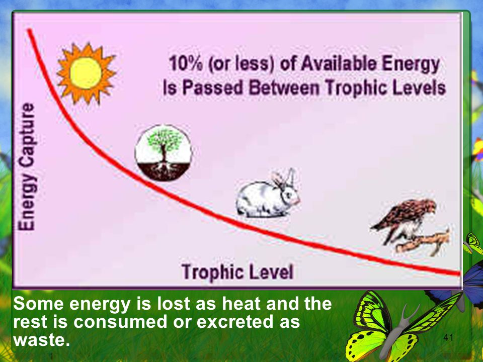 Some energy is lost as heat and the rest is consumed or excreted as waste.