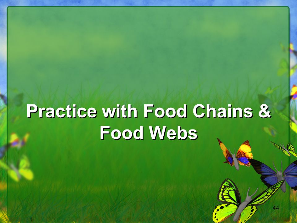 Practice with Food Chains & Food Webs