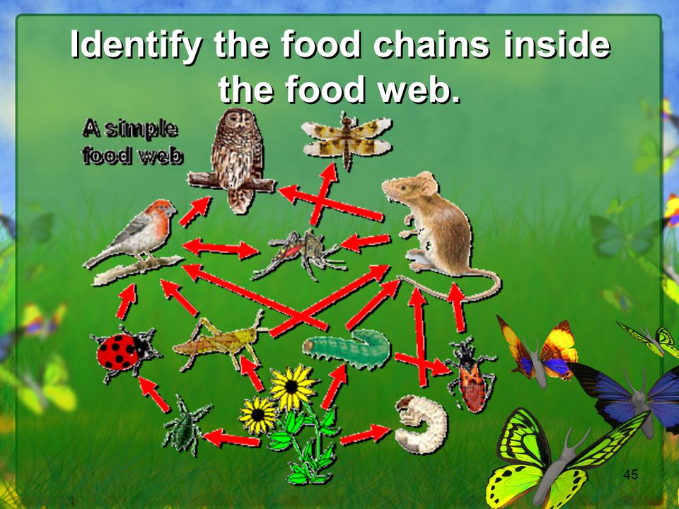 Identify the food chains inside the food web.