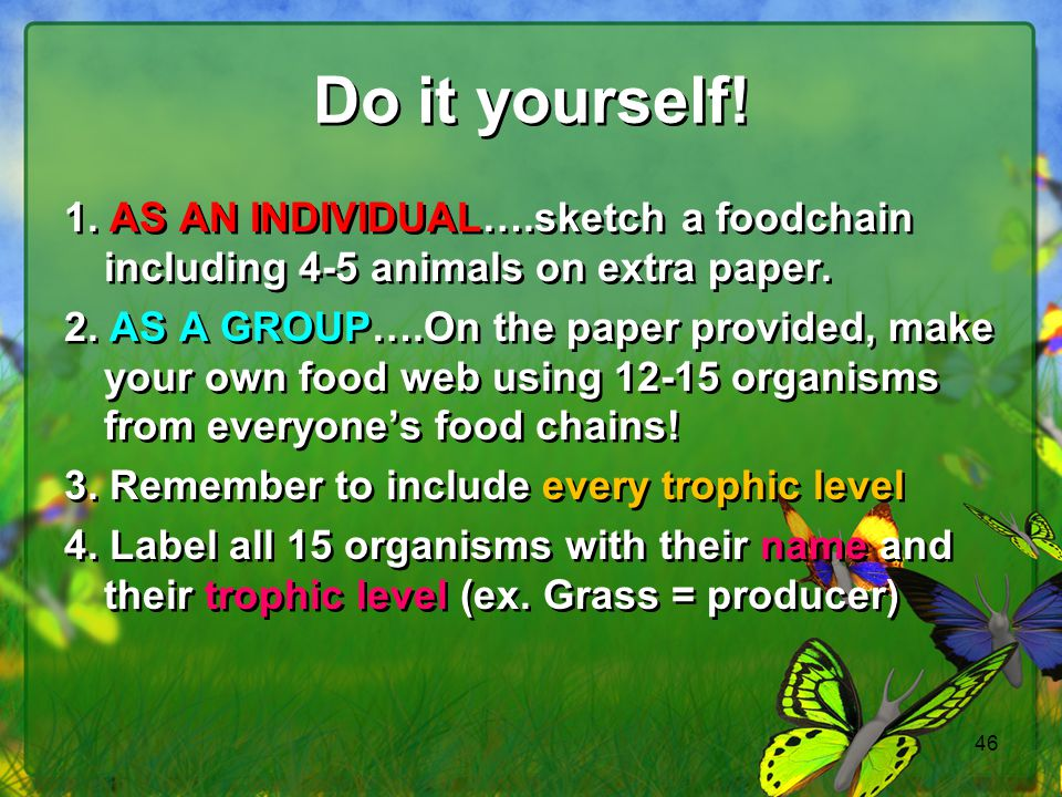 Do it yourself! 1. AS AN INDIVIDUAL….sketch a foodchain including 4-5 animals on extra paper.