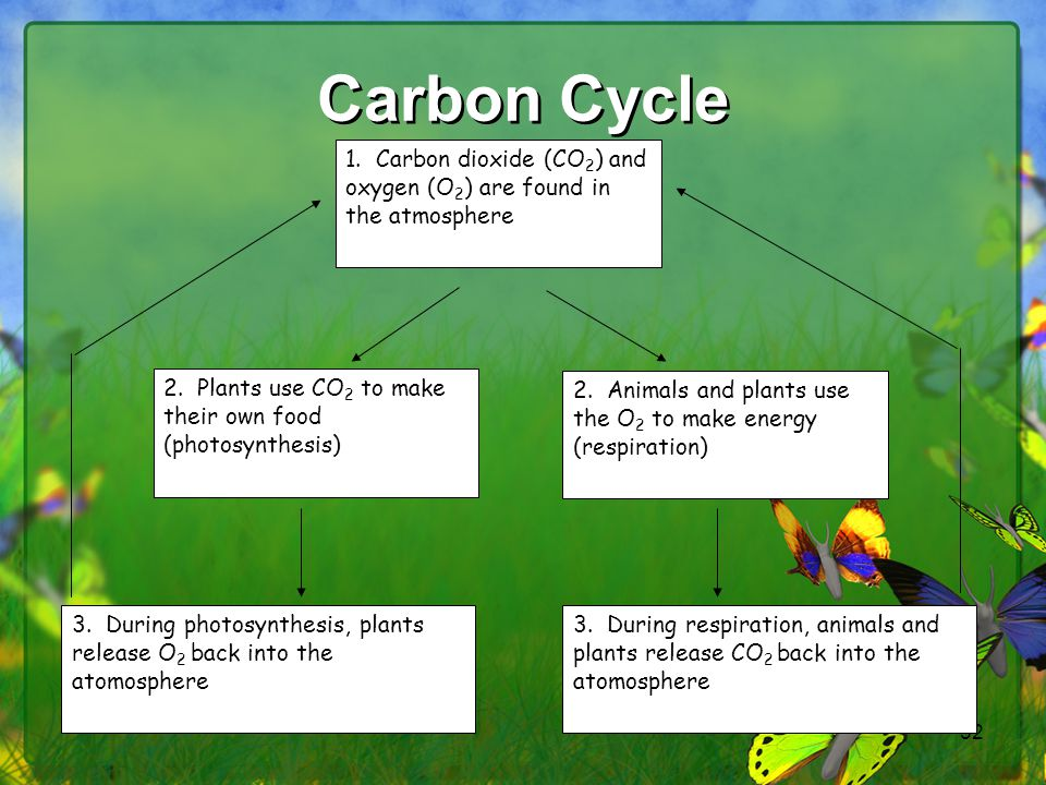 Carbon Cycle 1. Carbon dioxide (CO2) and oxygen (O2) are found in the atmosphere. 2. Plants use CO2 to make their own food (photosynthesis)