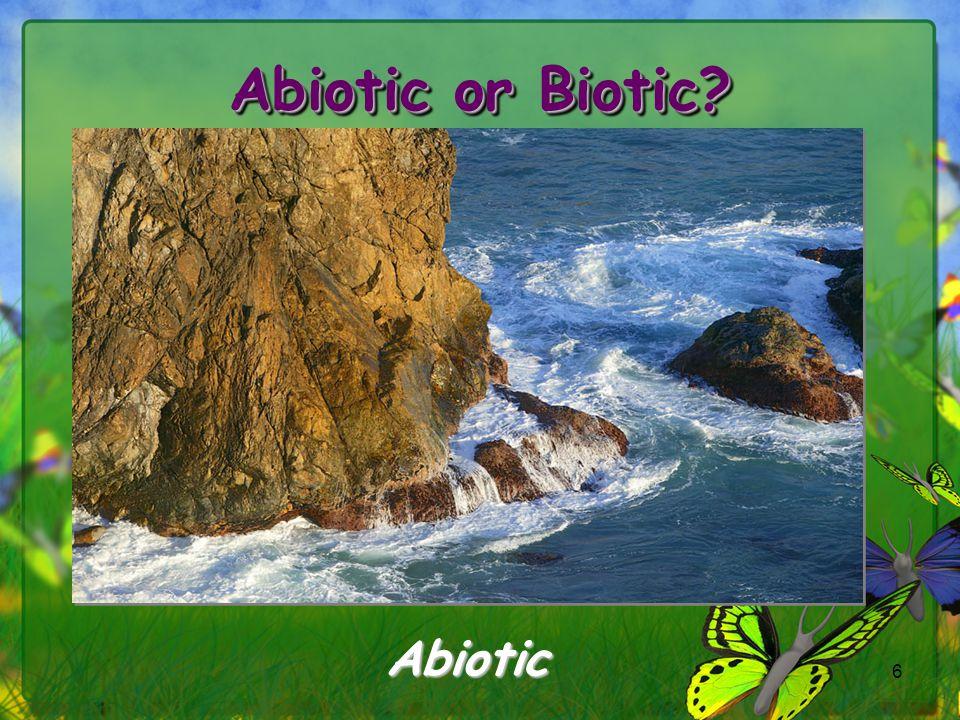 Abiotic or Biotic Abiotic