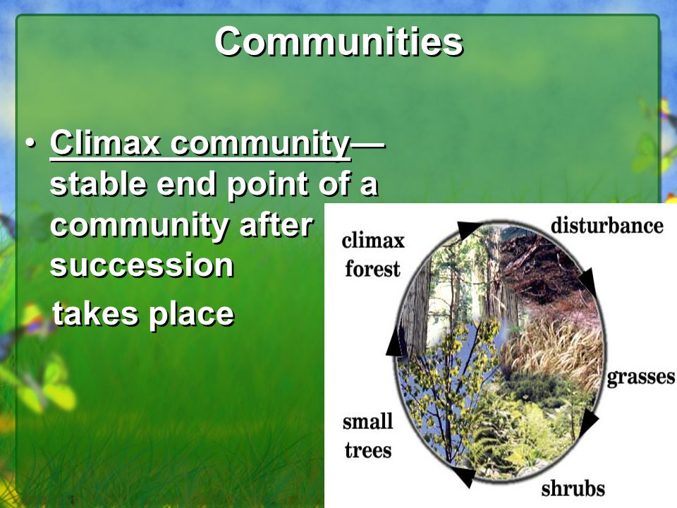 Communities Climax community—stable end point of a community after succession takes place