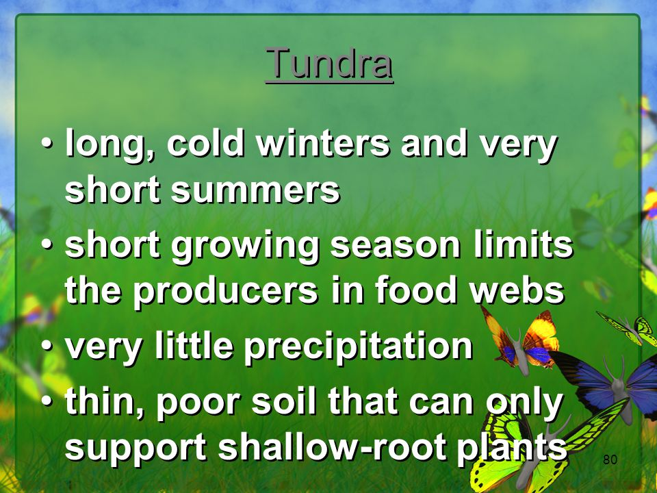 Tundra long, cold winters and very short summers