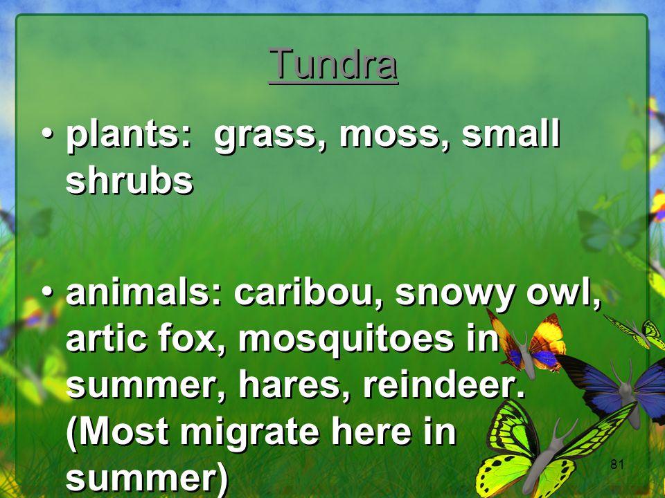 Tundra plants: grass, moss, small shrubs