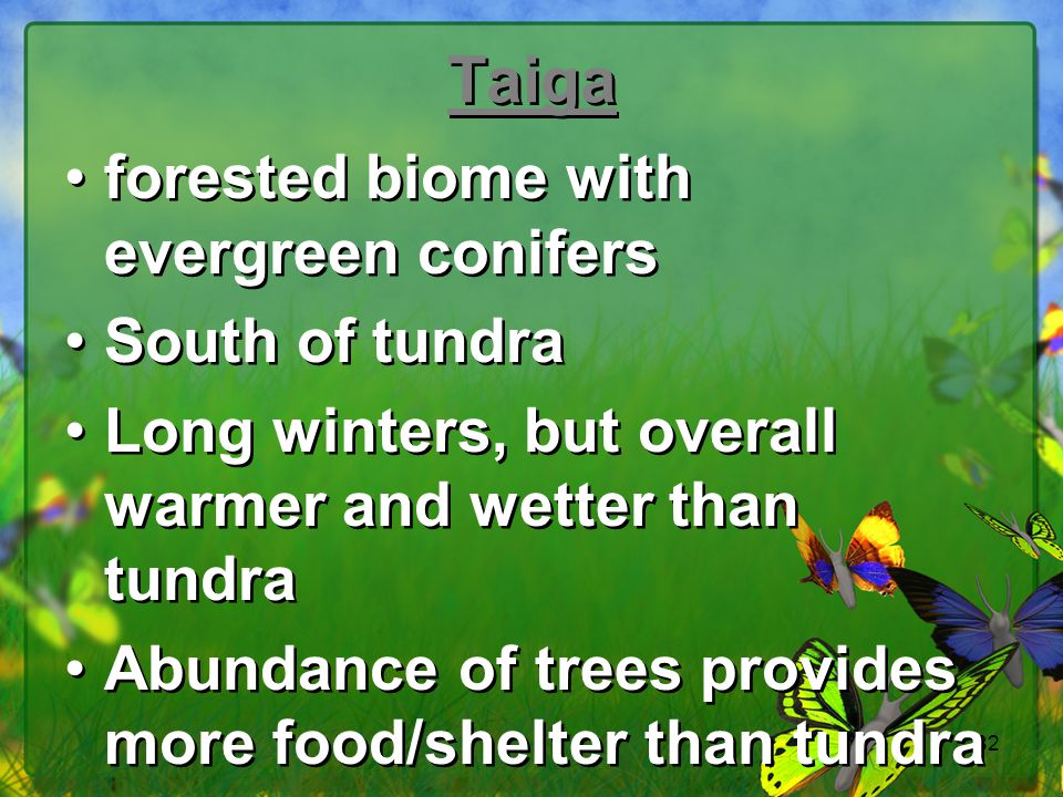 Taiga forested biome with evergreen conifers South of tundra