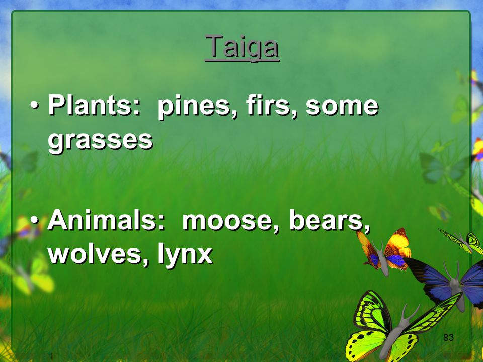 Taiga Plants: pines, firs, some grasses