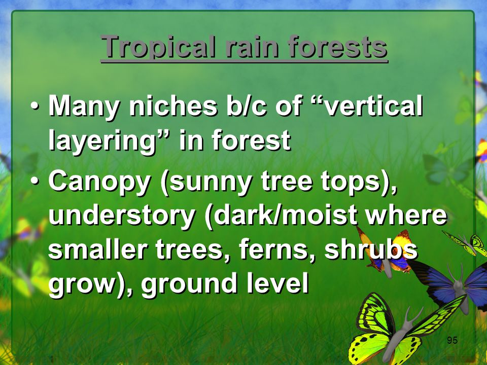 Tropical rain forests Many niches b/c of vertical layering in forest