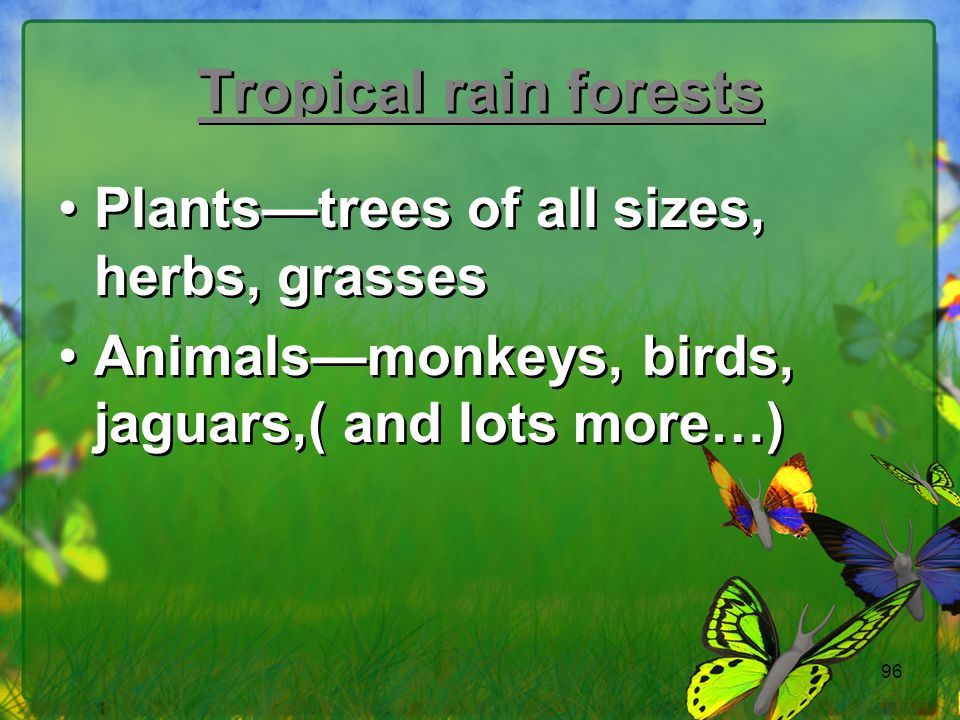 Tropical rain forests Plants—trees of all sizes, herbs, grasses