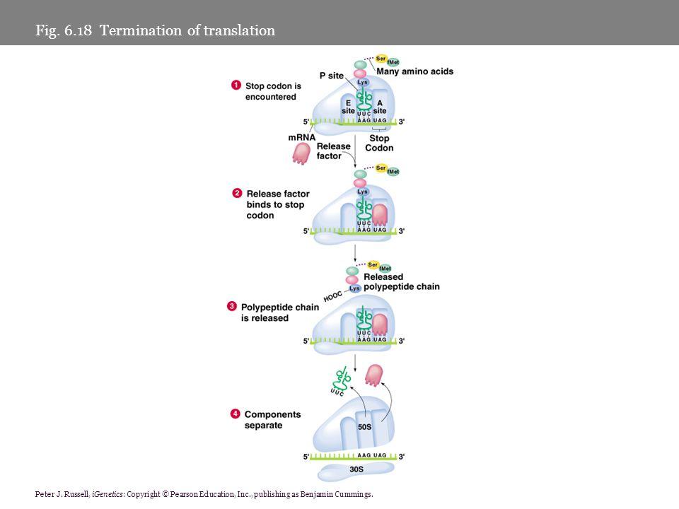 Fig. 6.18 Termination of translation