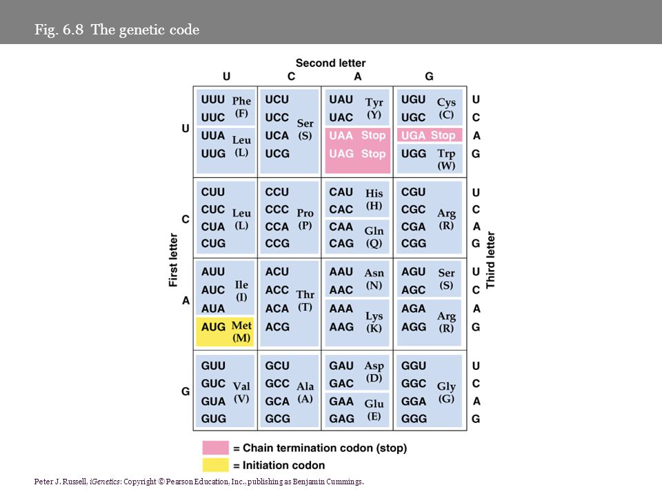 Fig. 6.8 The genetic code