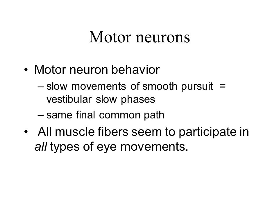 Motor neurons Motor neuron behavior