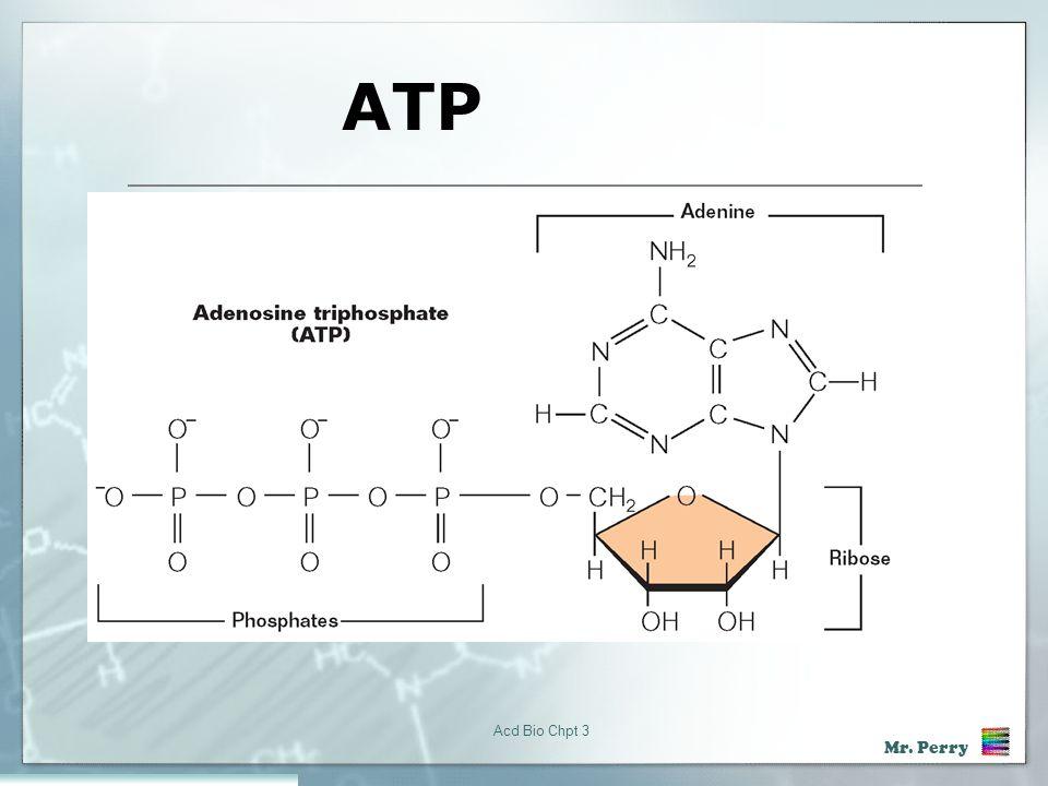 ATP Acd Bio Chpt 3