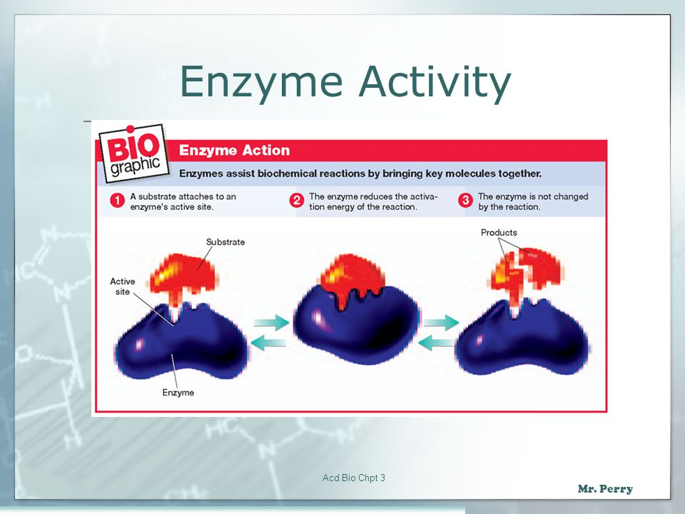 Enzyme Activity Acd Bio Chpt 3