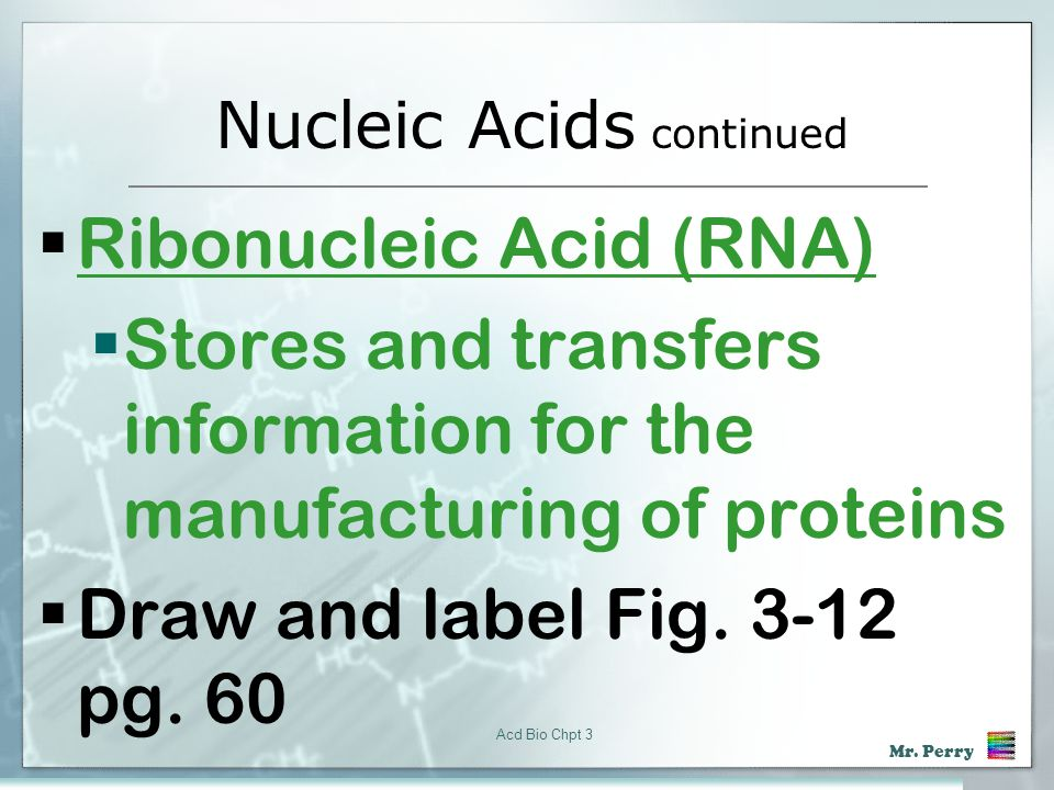 Nucleic Acids continued