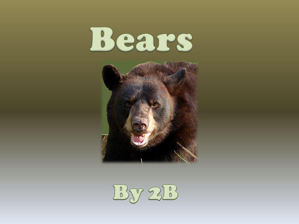 Bears By 2B