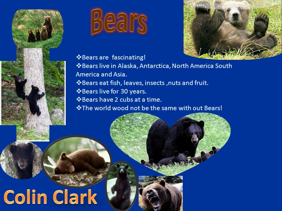 Bears Colin Clark Bears are fascinating!