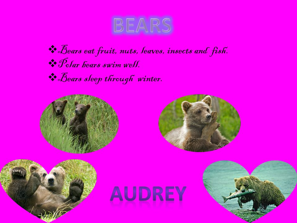 BEARS Audrey Bears eat fruit, nuts, leaves, insects and fish.