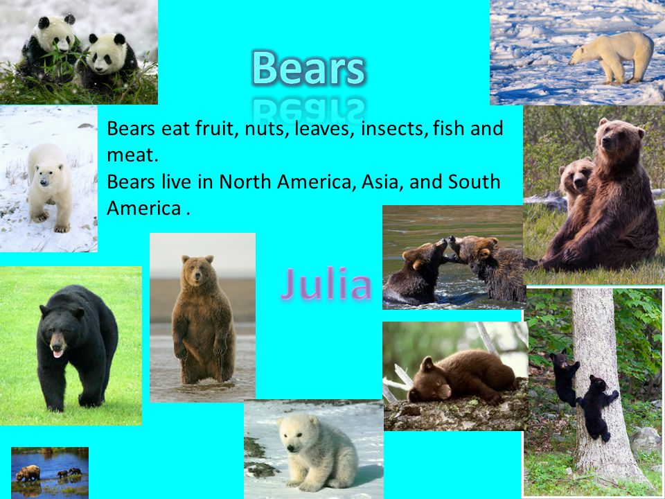 Bears Julia Bears eat fruit, nuts, leaves, insects, fish and meat.