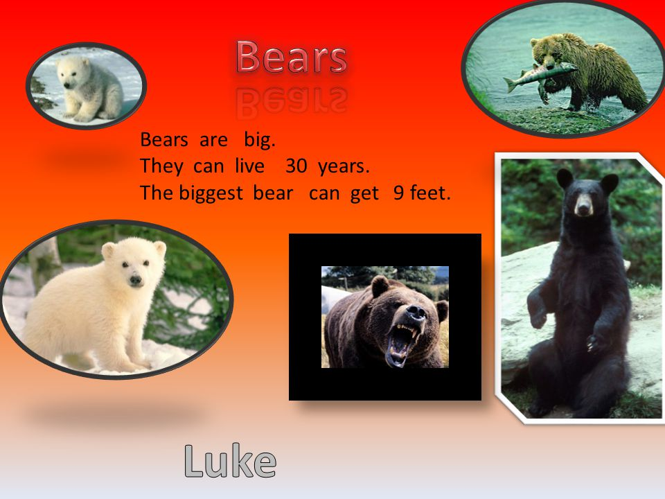 Bears Luke Your Text Here