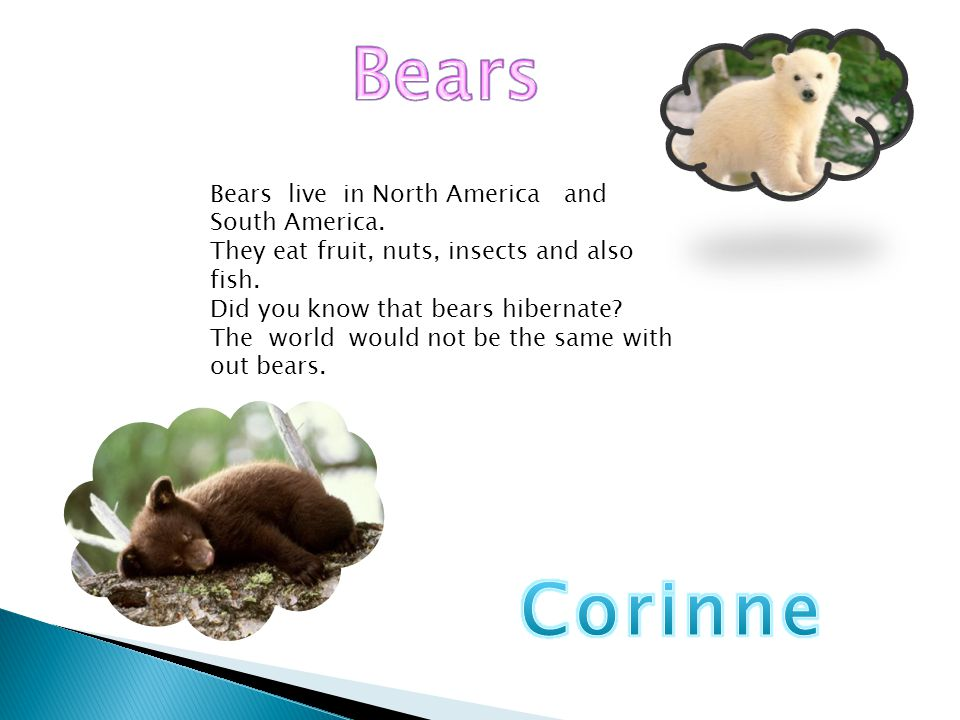 Bears Corinne Bears live in North America and South America.