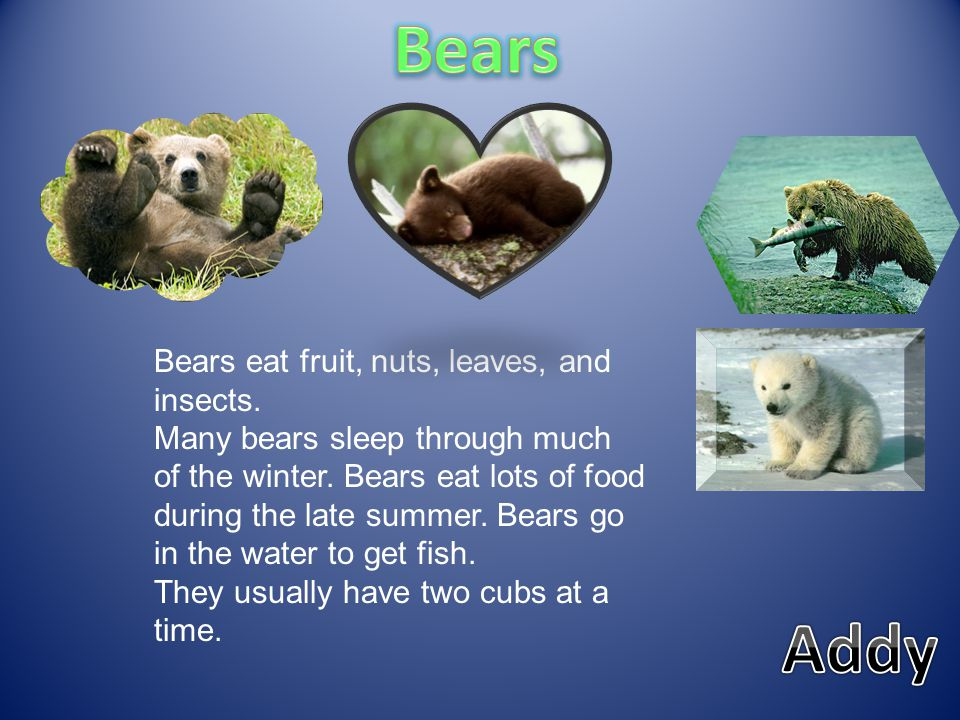 Bears Addy Bears eat fruit, nuts, leaves, and insects.