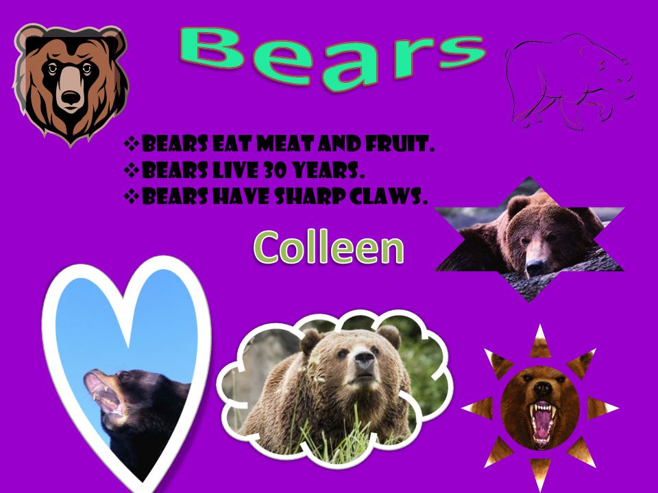 Bears Colleen Bears eat meat and fruit. Bears live 30 years.