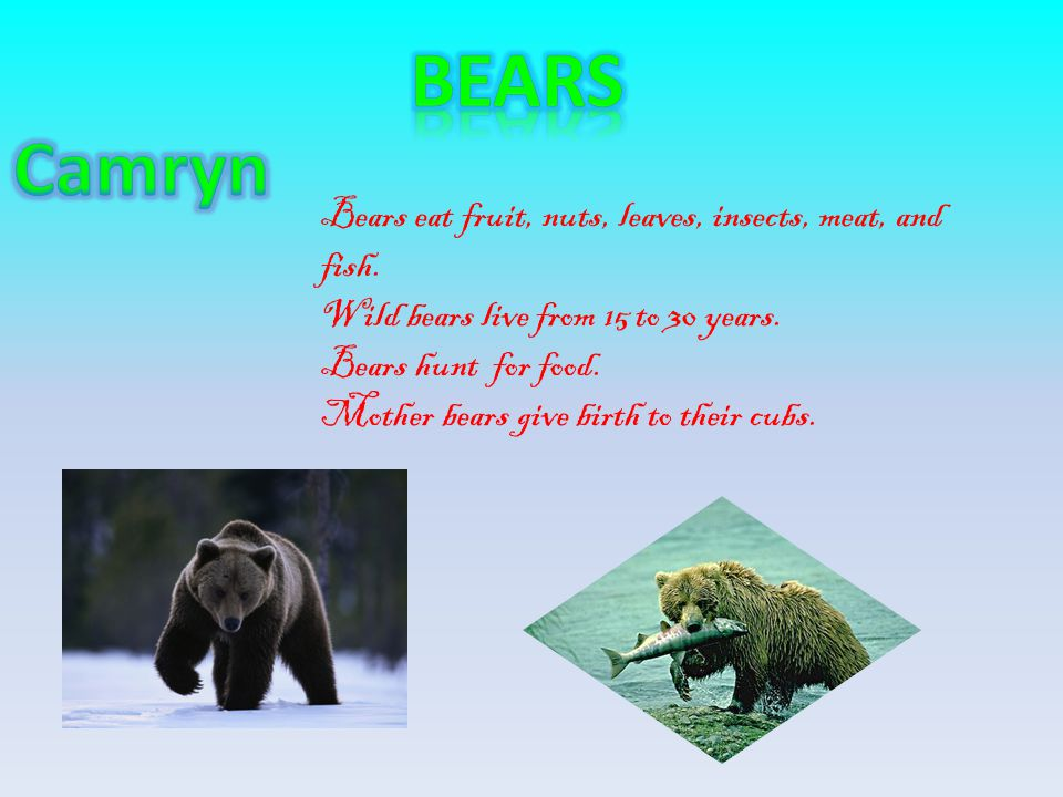 Bears Camryn Bears eat fruit, nuts, leaves, insects, meat, and fish.