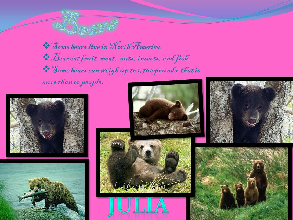 Bears julia Some bears live in North America.