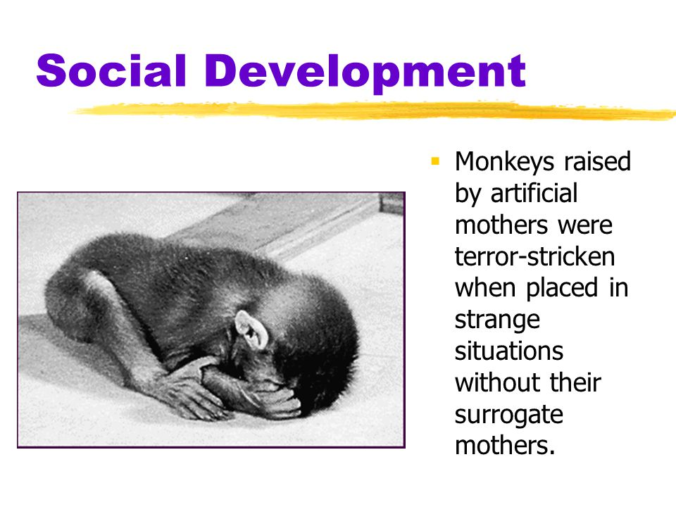 Social Development Monkeys raised by artificial mothers were terror-stricken when placed in strange situations without their surrogate mothers.