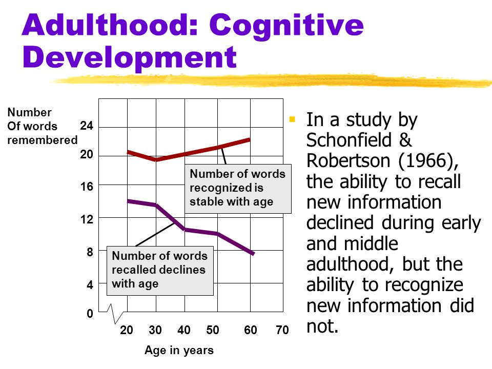 Adulthood: Cognitive Development