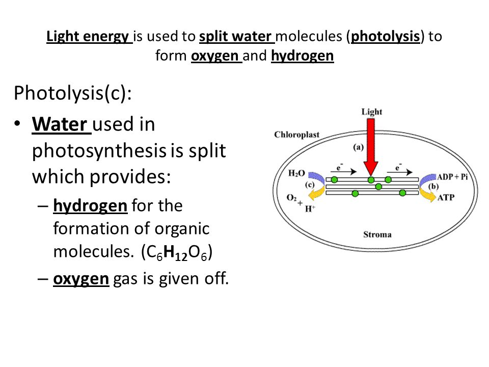 Water used in photosynthesis is split which provides: