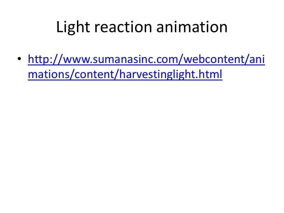 Light reaction animation