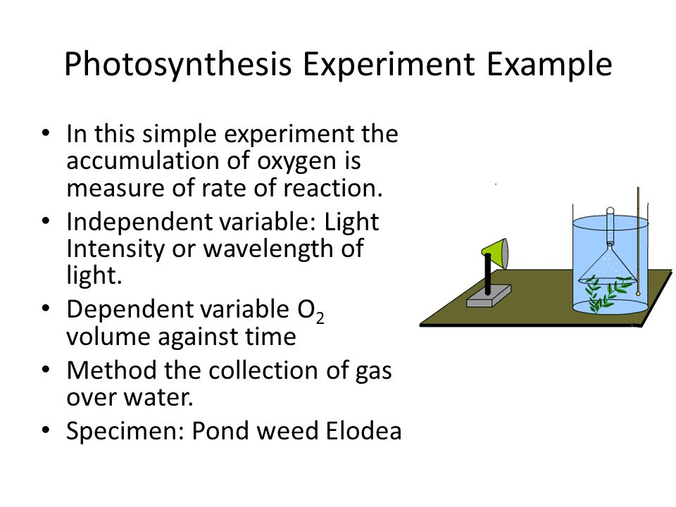 Photosynthesis Experiment Example