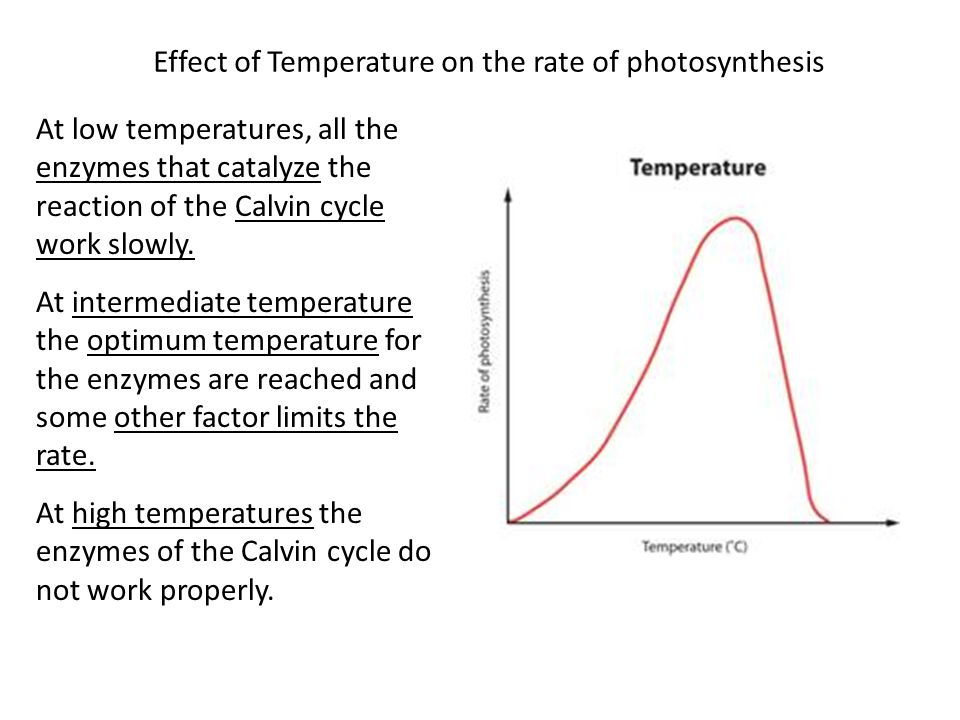 Effect of Temperature on the rate of photosynthesis