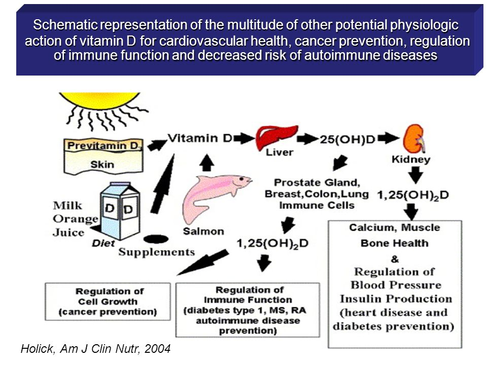 Schematic representation of the multitude of other potential physiologic action of vitamin D for cardiovascular health, cancer prevention, regulation of immune function and decreased risk of autoimmune diseases