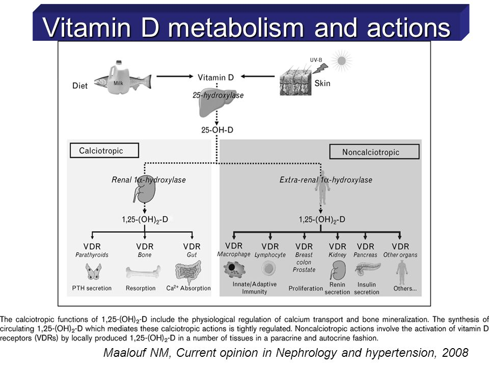 Vitamin D metabolism and actions