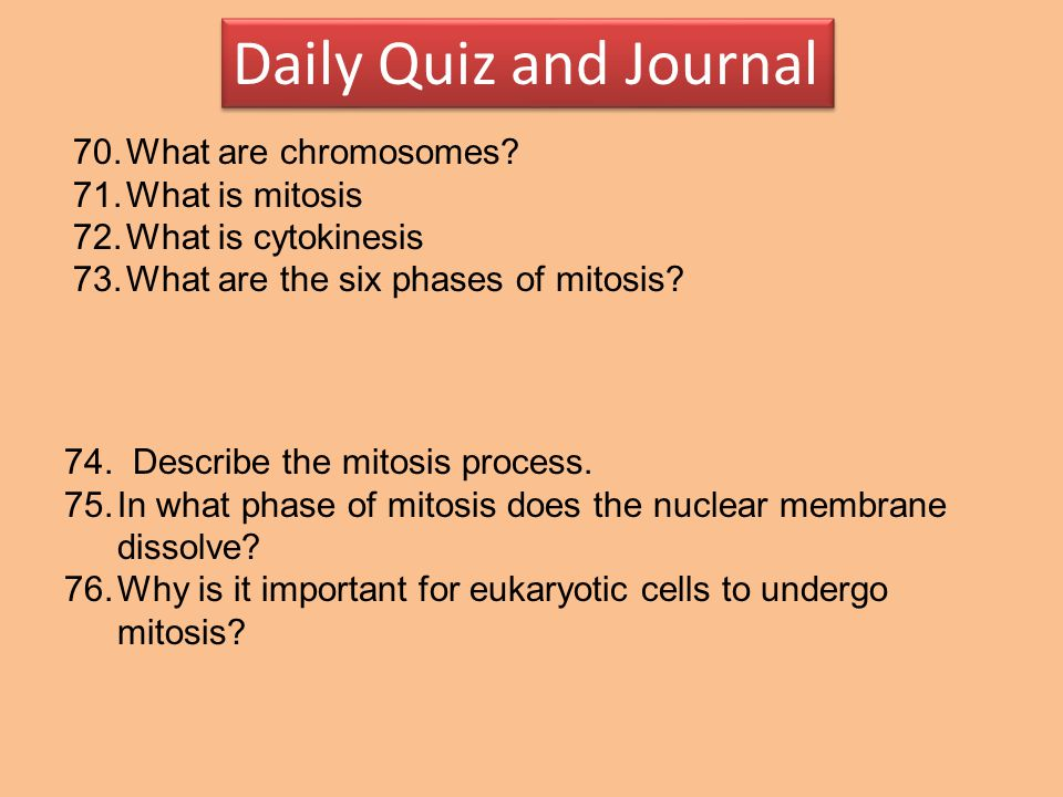 Daily Quiz and Journal What are chromosomes What is mitosis