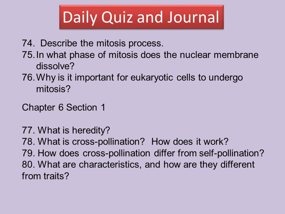 Daily Quiz and Journal 74. Describe the mitosis process.