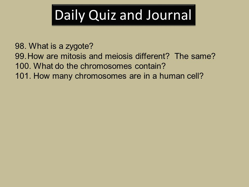 Daily Quiz and Journal 98. What is a zygote