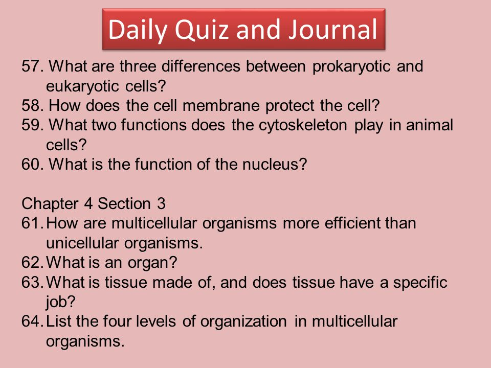 Daily Quiz and Journal 57. What are three differences between prokaryotic and eukaryotic cells 58. How does the cell membrane protect the cell